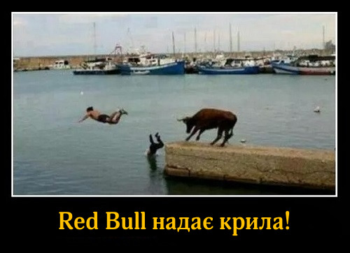 Red Bull надає крила! На фото: чоловіки, втікаючи від бика цибають у воду