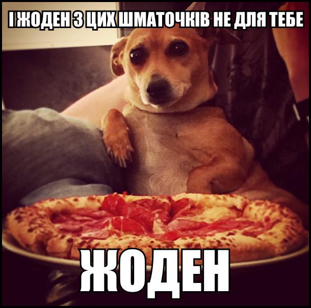 На дивані сидить песик і біля нього блюдо з піцою. Каже: - І жоден з цих шматочків не для тебе. Жоден