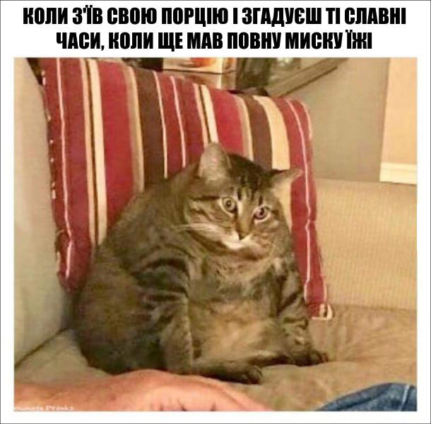 Коли з'їв свою порцію і згадуєш ті славні часи, коли ще мав повну миску їжі. На фото: гладкий кіт
