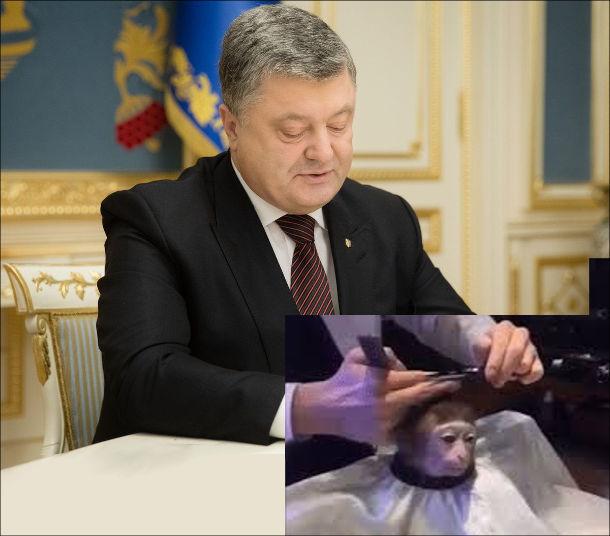 Мем Monkey Haircut (підстригання мавпи). Порошенко