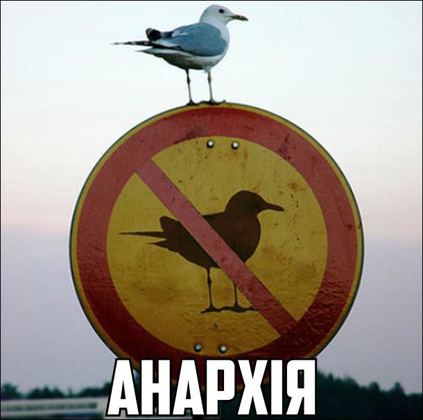 Чайка сидить на знакові, де заборонені чайки. Анархія