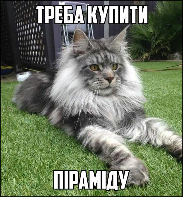 Кіт сидить неначе сфінкс. Треба купити піраміду