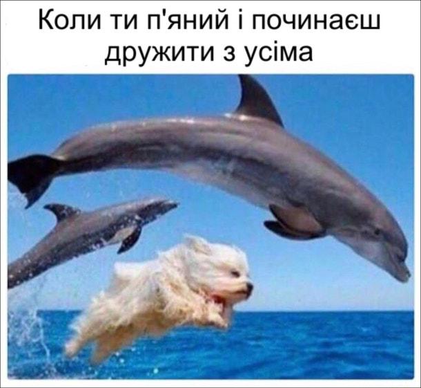 Коли ти п'яний і починаєш дружити з усіма. На фото: білий песик пригає разом з дельфінами