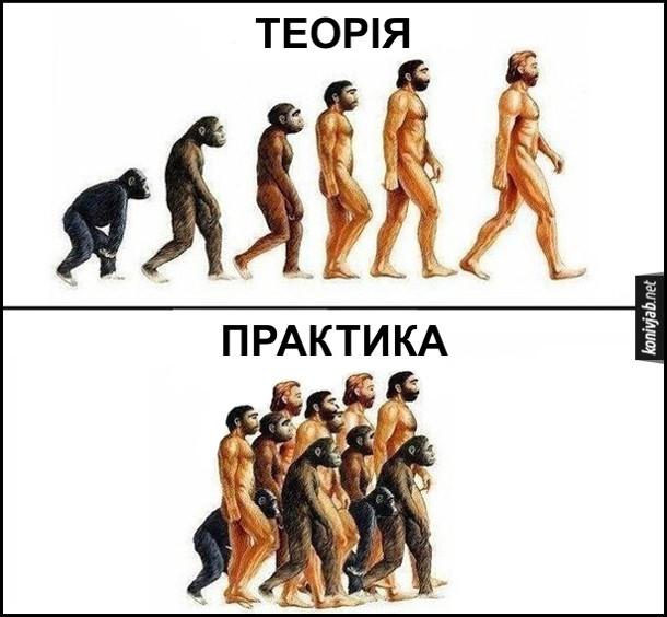 Прикол, жарт про еволюцію людини. Теорія: еволюція від мавпи до людини. Практика: і мавпи, і мавпоподібні, і люди йдуть по життю одночасно