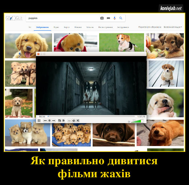 Як правильно дивитися фільми жахів. В пошуку зображень Google ввести слово puppies і з'являться фотки з маленькими песиками звевху цього вікна відкрити медіаплеєр і дивитися жахи. Поряд з жахами видно кумедних песиків, то не так страшно