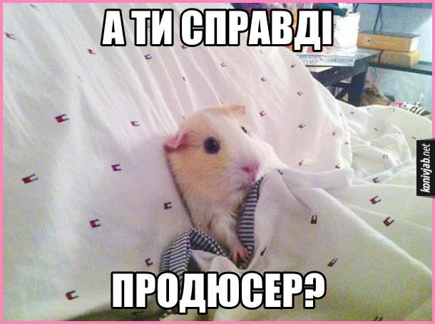 Затягнув у ліжко. Морська свинка ледить в ліжку і питає: - А ти справді продюсер?