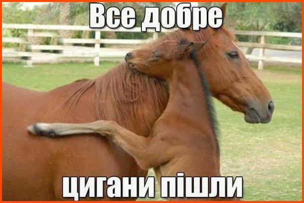Жарт, прикол про коней. Лоша, обіймає лошицю, та йому каже: - Все добре, цигани пішли