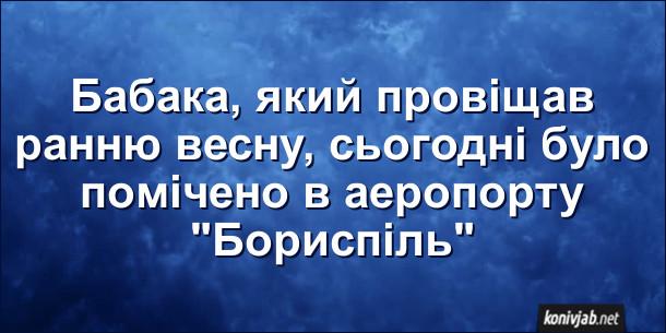 """Анекдот про весну. Бабака, який провіщав ранню весну, сьогодні було помічено в аеропорту """"Бориспіль"""""""