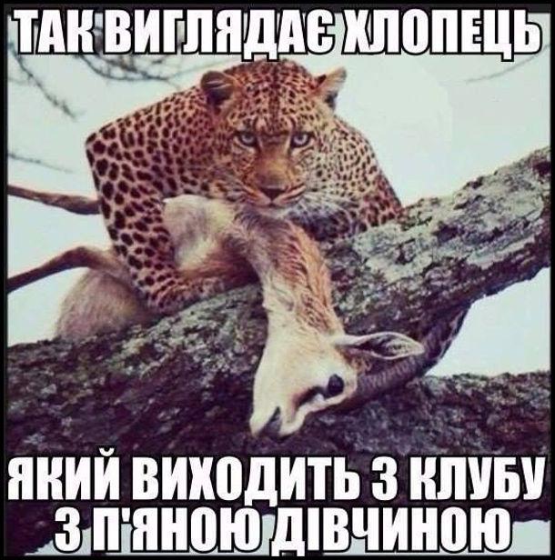 Прикол Хлопець і п'яна дівчина. Леопард, що тримає косулю. Так виглядає хлопець, який виходить з клубу з п'яною дівчиною