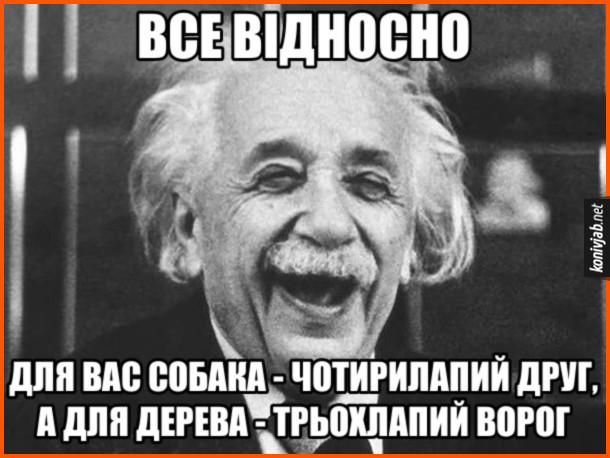 Мем, жарт про теорію відносності. Все відносно. Для вас собака - чотирилапий друг, а для дерева - трьохлапий ворог. На фото: Альберт Ейнштейн сміється