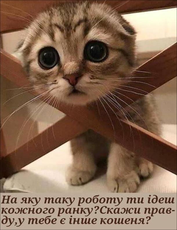 Смішне кошеня: - На яку таку роботу ти ідеш кожного ранку. Скажи правду, у тебе є інше кошеня?