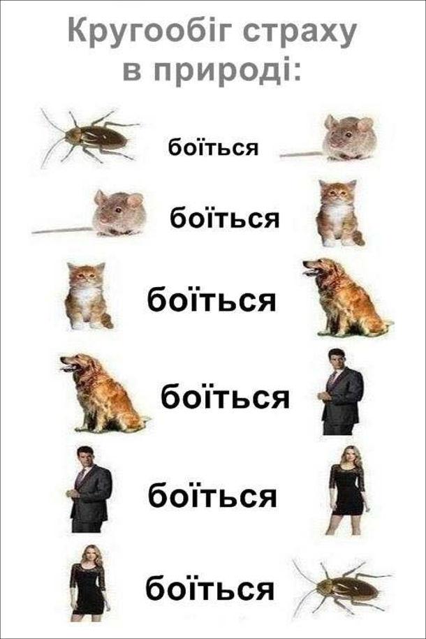 Кругообіг страху в природі. Таргани бояться мишей, миші пояться котів, коти бояться собак, собаки бояться чоловіків, чоловіки бояться жінок, жінки бояться тарганів