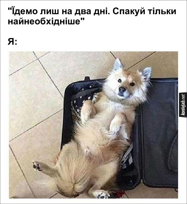 """Прикол Як збиратись в дорогу. """"Їдемо лиш на два дні. Спакуй тільки найнеобхідніше"""" Я: поклав у валізу собаку"""