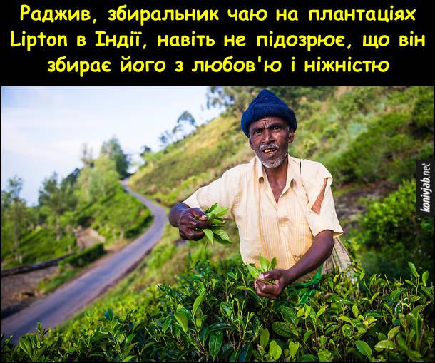 Жарт про індійський чай. Раджив, збиральник чаю на плантаціях Lipton в Індії, навіть не підозрює, що він збирає його з любов'ю і ніжністю
