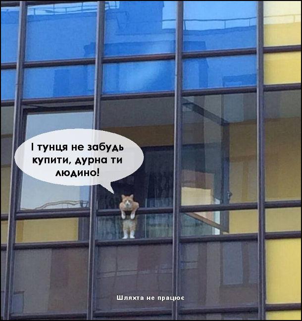 Кумедне фото з котом. Кіт виглядає з балкона і гукає: - І тунця не забудь купити, дурна ти людино!