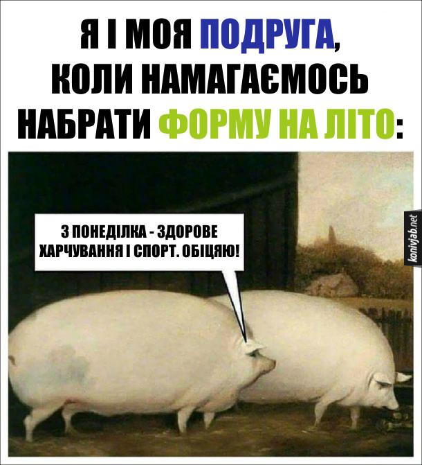 Я і моя подруга, коли намагаємось набрати форму на літо. Дві гладкі свині. Одна каже: - З понеділка - здорове харчування і спорт. Обіцяю!
