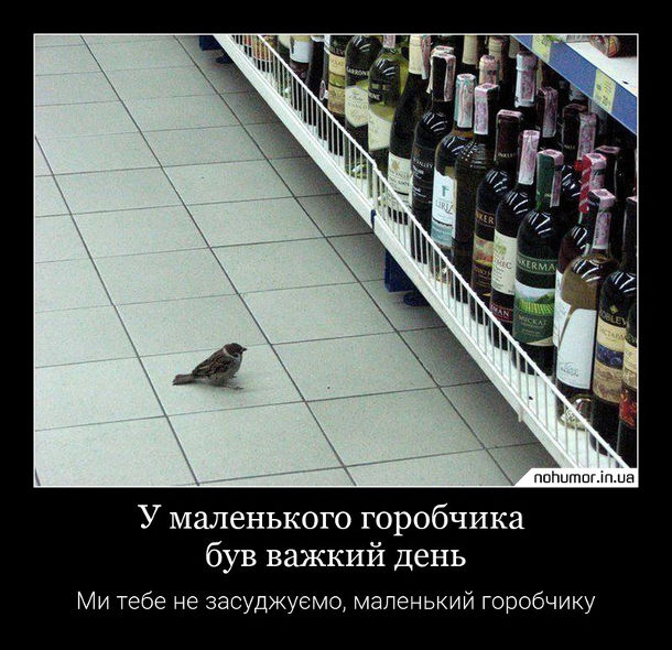 Горобець в супермаркеті ходить по алкогольному відділу і роздивляється пляшки з вином. У маленького горобчика був важкий день. Ми тебе не засуджуємо, маленький горобчику