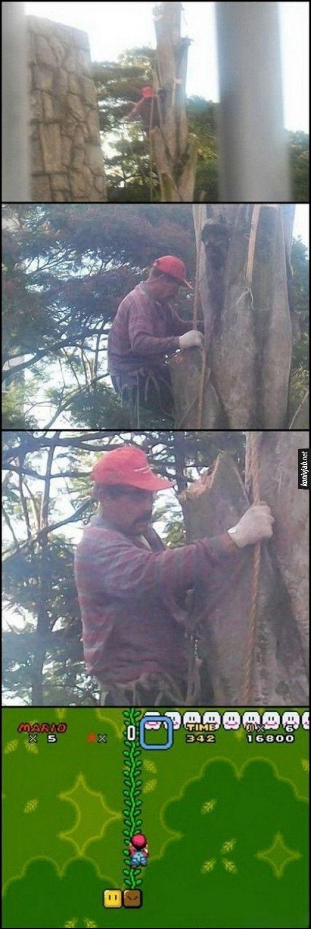 Чоловік схожий на Маріо (з комп'ютерної гри Супер Маріо) лізе по дереву