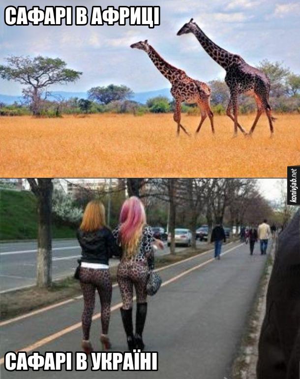 Жарт про сафарі. Сафарі в Африці - дві жирафи йдуть саваною. Сафарі в Україні: дві дівчини в леопардових лосинах йдуть тротуаром