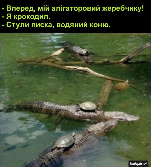 Прикол. Черепаха і крокодил. - Вперед, мій алігаторовий жеребчику! - Я крокодил. - Стули писка, водяний коню.