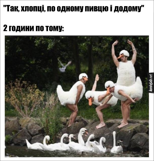 """П'яні витівки. """"Так, хлопці, по одному пивцю і додому"""".  2 години по тому: понапивалися, одягли костюми лебедів і позують на березі озера перед справжніми лебедями"""