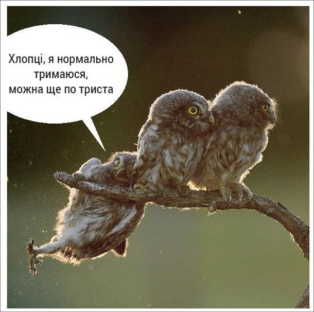 Жарт про сов. На гілці сидять три сови. Одна сова ледь тримається і каже: - Хлопці, я нормально тримаюся, можна ще по триста