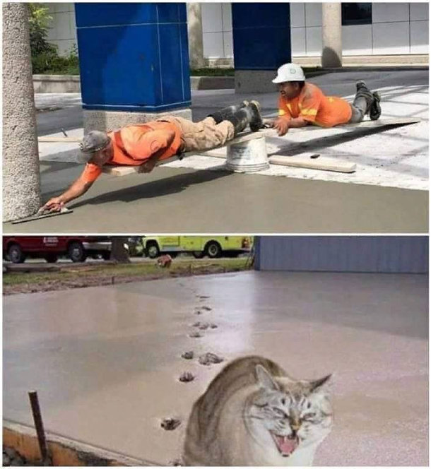 Прикол кіт залишив сліди на бетоні. Майстер, лежачи на дошці вирівнює бетон, помічник лежить з іншого боку дошки, щоб майстер не впав. А потім кіт пробігся по свіжому бетону і залишив на ньому сліди