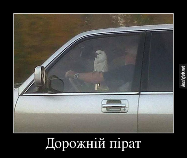 Дорожній пірат. В автомобілі водій з папугою на плечі