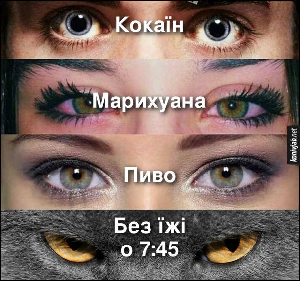 Мем про очі. Очі після кокаїну, після марихуани, після пива, а також очі кота без іжі о 7:45
