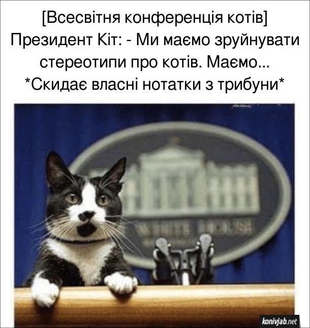 Прикол. [Всесвітня конференція котів] Президент Кіт: - Ми маємо зруйнувати стереотипи про котів. Маємо... *Скидає власні нотатки з трибуни*
