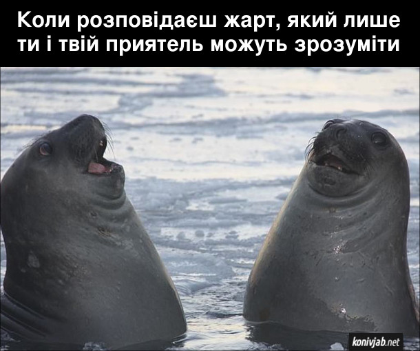 Прикол Два тюлені ніби сміються Коли розповідаєш жарт, який лише ти і твій приятель можуть зрозуміти