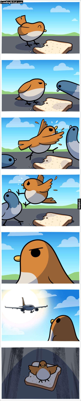 Комікс про пташку і хліб. Пташка глює шматок хліба. До неї підійшла інша пташка, вона її прогнала, підійшла інша - прогнала й іншу. Тут сідає літак - пташка стала, розправила крила, щоб битися за хліб