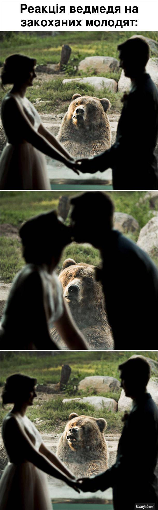 Фотоприкол Ведмідь. Реакція ведмедя на закоханих молодят в зоопарку