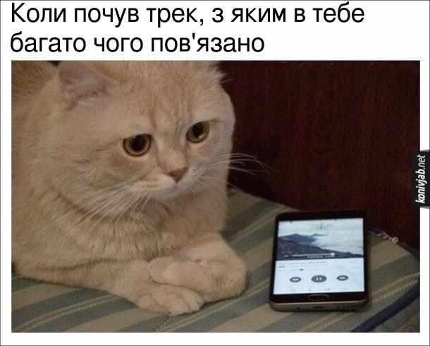 Прикол Кіт слухає музику. Коли почув трек, з яким в тебе багато чого пов'язано