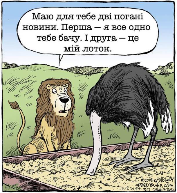 Прикол Лев і страус. Страус, побачивши лева, заховав голову в пісок. Лев підійшов до нього і каже: - Маю для тебе дві погані новини. Перша - я все одно тебе бачу. І друга - це мій лоток.