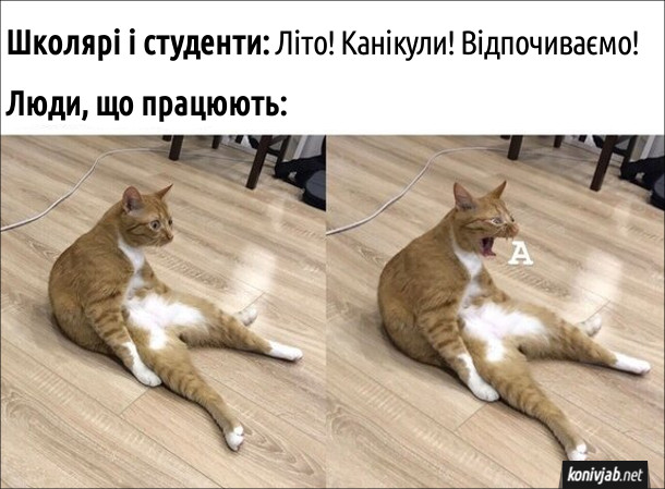 """Мем про канікули. Школярі і студенти: Літо! Канікули! Відпочиваємо! Люди, що працюють: (кіт кричить """"А"""")"""