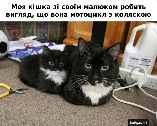Прикол Кішка з кошеням. Моя кішка з своїм малюком робить вигляд, що вона мотоцикл з коляскою