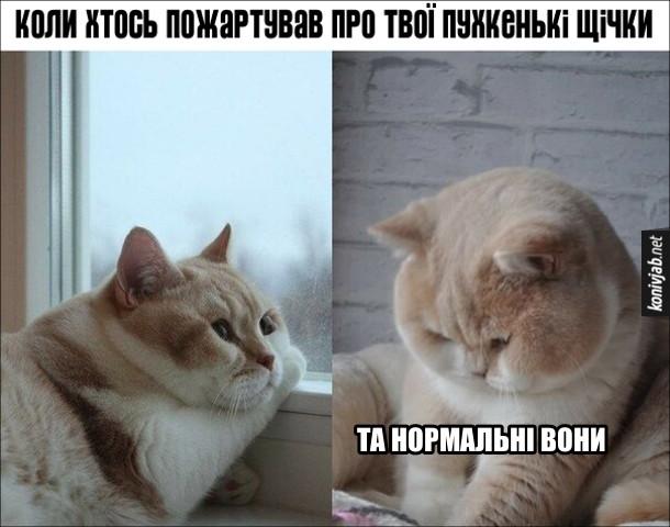 Прикол Щокатий кіт. Коли хтось пожартував про твої пухкенькі щічки. Кіт: - Та нормальні вони.