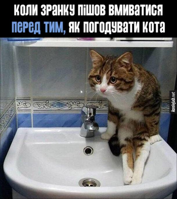 Мем Не погодував кота. Коли зранку пішов вмиватися перед тим , як погодувати кота. Кіт виліз в раковину і дивиться на тебе