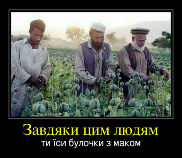 Демотиватор Афганці вирощують мак для виробництва наркотиків. Завдяки цим людям ти їси булочки з маком