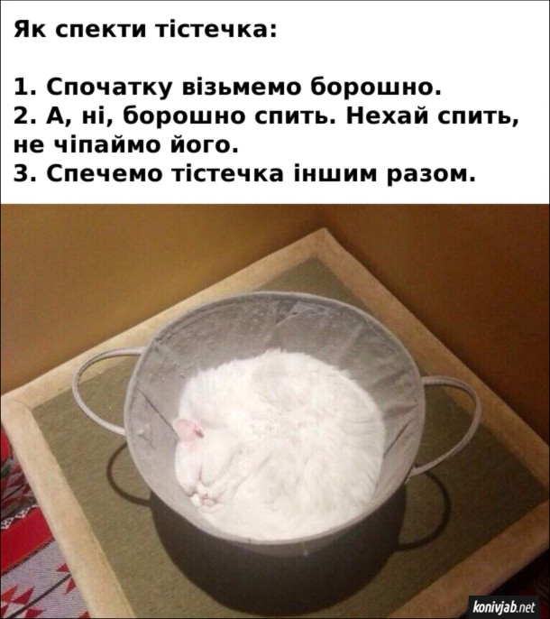 Смішний рецепт тістечок. Як спекти тістечка: 1. Спочатку візьмемо борошно. 2. А, ні, борошно спить (білий кіт спить в ситі для борошна). Нехай спить, не чіпаймо його. 3. Спечемо тістечка іншим разом.