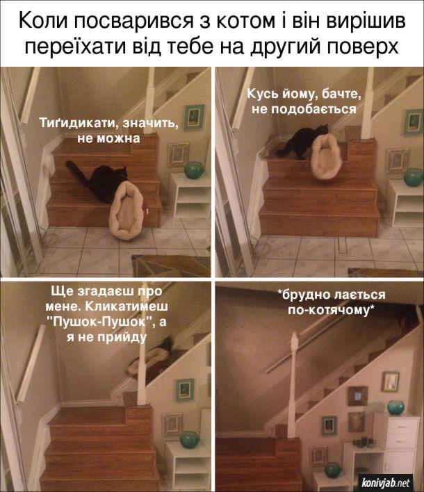 """Жарт Кіт образився. Коли посварився з котом і він вирішив переїхати від тебе на другий поверх. Кіт тримає в зубах своє ліжечко і тягне його сходами наверх. При цьому сердито бурчить: - Тиґидикати, значить, не можна. Кусь йому, бачте, не подобається. Ще згадаєш про мене. Кликатимеш """"Пушок-Пушок"""", а я не прийду. *Брудно лається по-котячому*"""