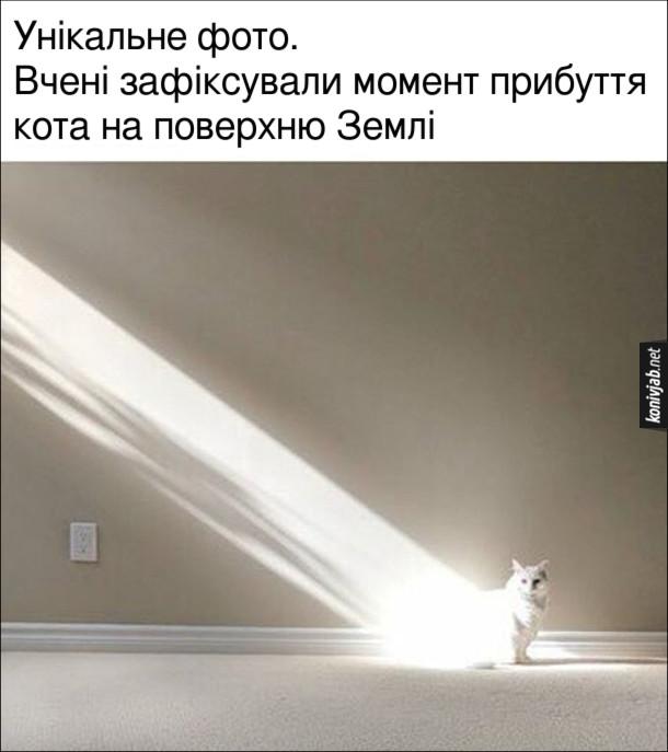Мем Кіт і сонячне проміння. Унікальне фото. Вчені зафіксували момент прибуття кота на поверхню Землі