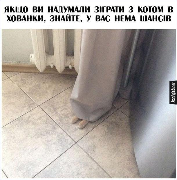 Смішна фотка Кіт сховався. Якщо ви надумали зіграти з котом в хованки, знайте, у вас нема шансів. Кіт сховався за шторою і видно його лапки