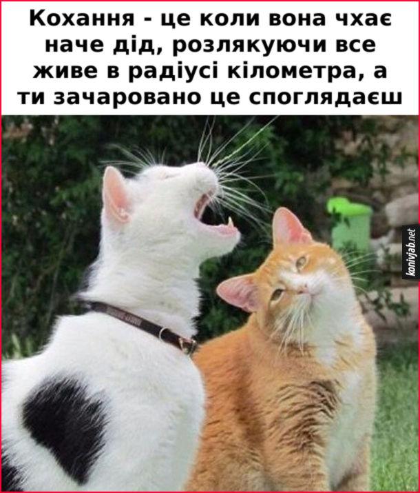 Мем Закоханий кіт. Кохання - це коли вона чхає наче дід, розлякуючи все живе в радіусі кілометра, а ти зачаровано це споглядаєш
