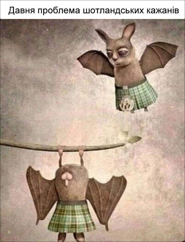 Смішний малюнок про кажанів. Давня проблема шотландських кажанів - коли чіпляються вниз головою, то задирається кілт
