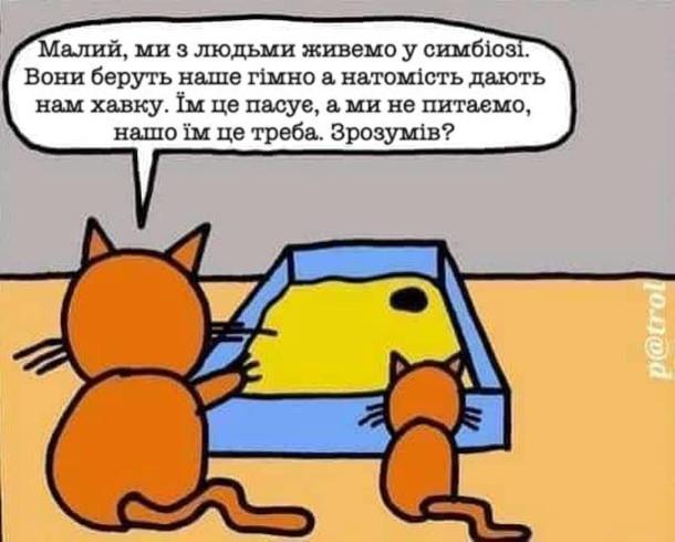 Котяча філософія. Кіт до свого сина: - Малий, ми з людьми живемо в симбіозі. Вони беруть наше гімно, а натомість дають нам хавку. Їм це пасує, а ми не питаємо, нашо їм це треба. Зрозумів?