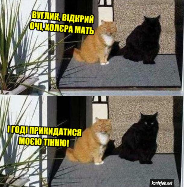 Смішна фотка Два коти, один кіт рудий, другий - чорний. Рудий: - Вуглик, відкрий очі, холера мать. І годі прикидатися моєю тінню!