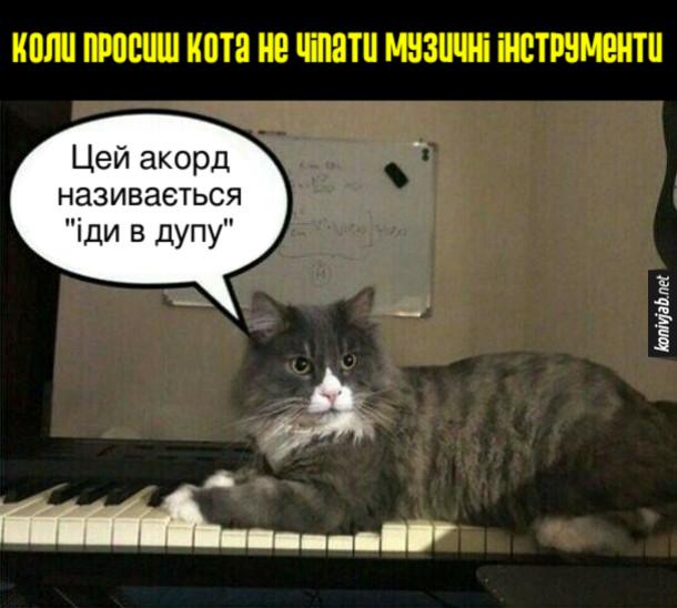 """Прикол Кіт Музичний інструмент. Коли просиш кота не чіпати музичні інструменти, кіт сів на клавіатуру і сказав: - Цей акорд називається """"іди в дупу"""""""