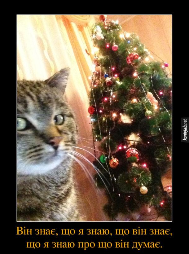 Демотиватор Кіт і ялинка. Кіт сидить біля ялинки і загадково поглядає. Ця мить, коли він знає, що я знаю, що він знає, що я знаю про що він думає.